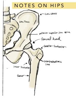 Diagram of hip for ballet
